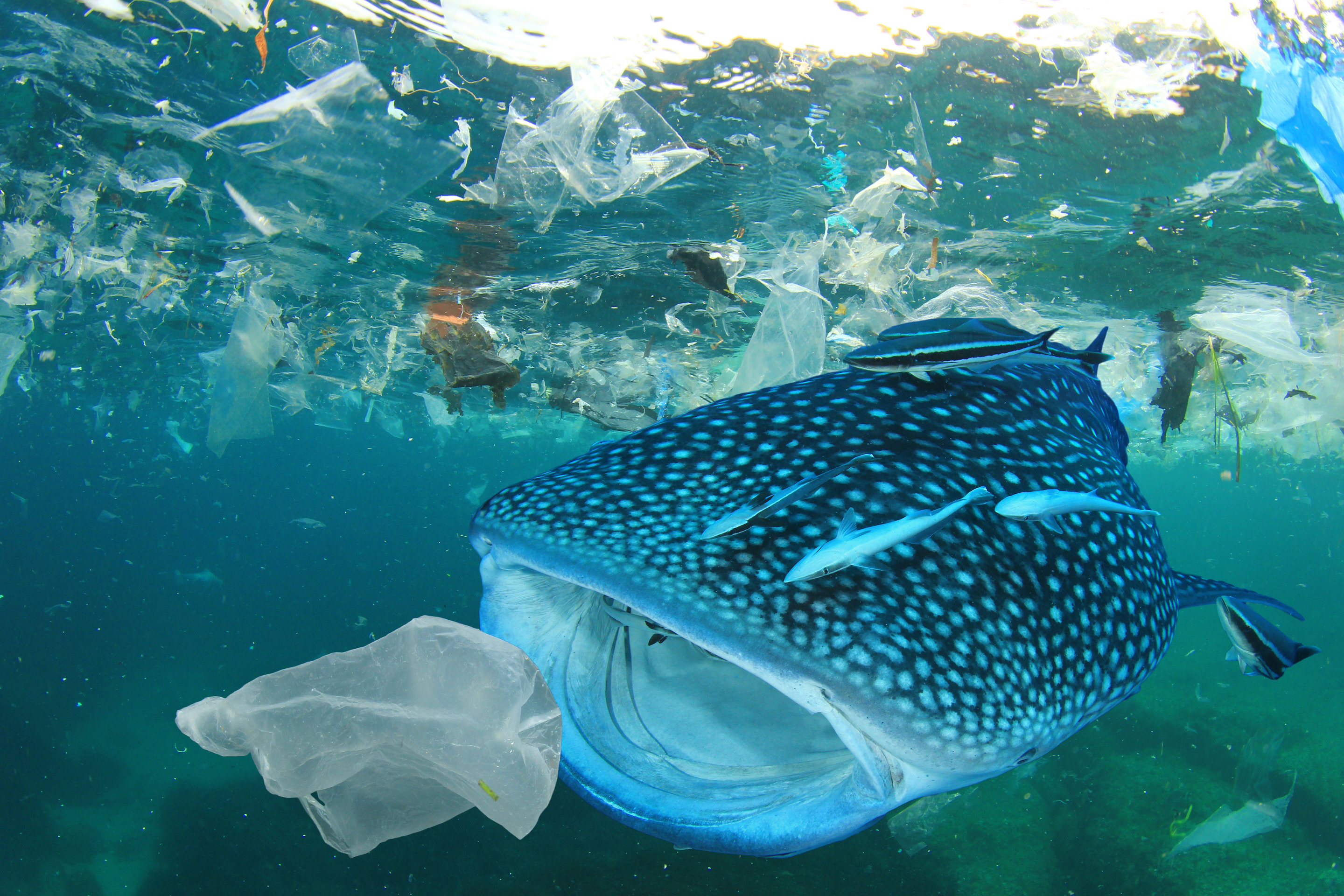 Fate of plastic waste